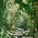 Ubud forest by Alita  Ong