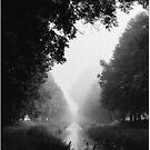 Flowing morning fog by Tomáš Hudolin