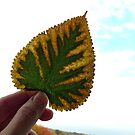 Holding a Leaf in Sunlight by lindsycarranza