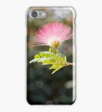 Delicate flower of pink  mimosa tree in sunlight closeup iPhone Case/Skin