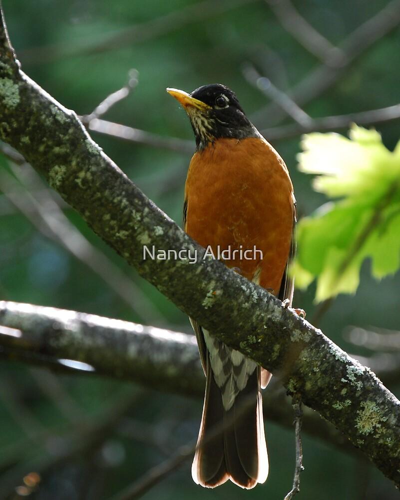 Mr. Robin by Nancy Aldrich
