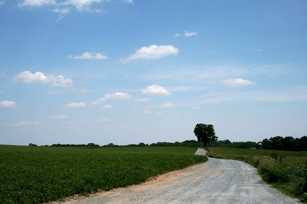 Farm Land by Terri Waughtel