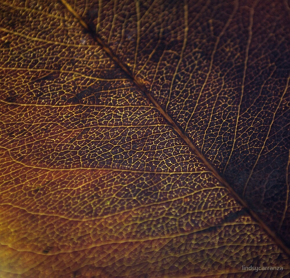 Brown and Gold by lindsycarranza