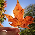 Holding Fall in my Hands by lindsycarranza