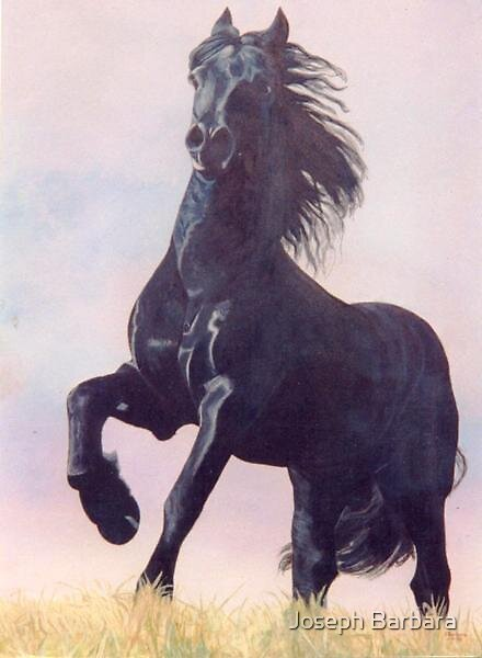 Frissian Stallion 2003 by Joseph Barbara