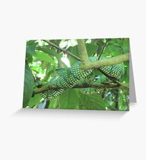 Rare python snake found in the Borneo Rainforest, Malaysia Greeting Card