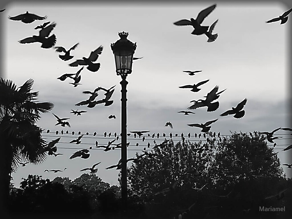 The birds... by Mariamel