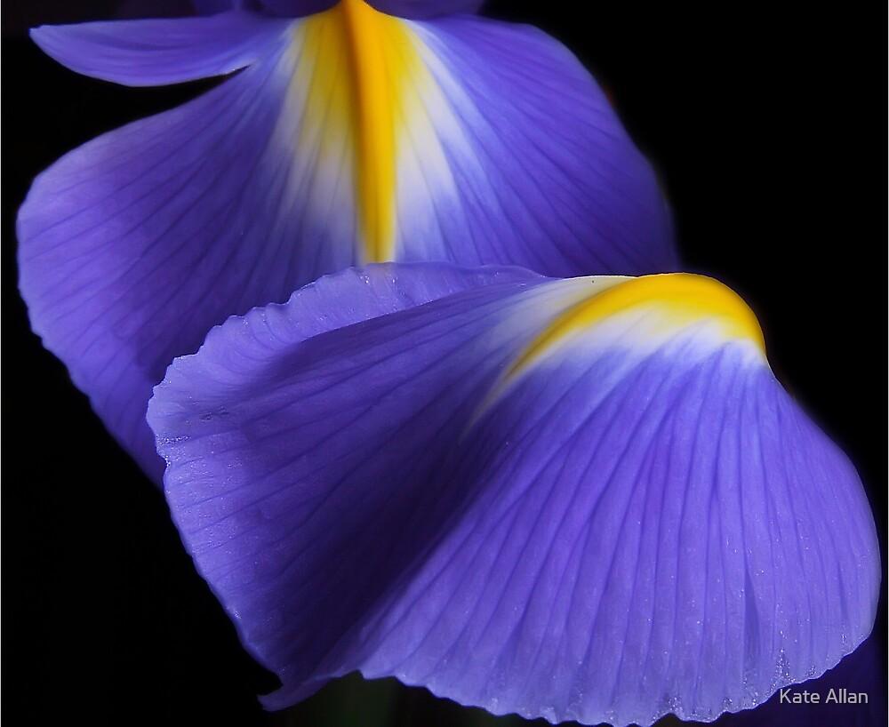Iris by Kate Allan