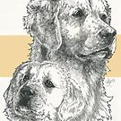 Golden Retriever Father & Son by BarbBarcikKeith