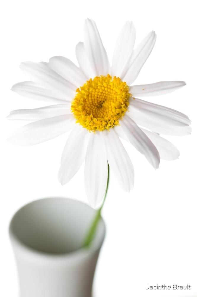 White Chrysanthemum 2 by Jacinthe Brault