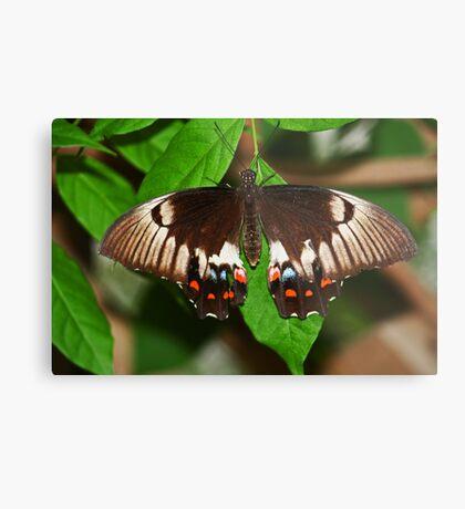 Schmetterling Metalldruck