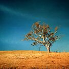 O Lonesome Tree by Clare Colins