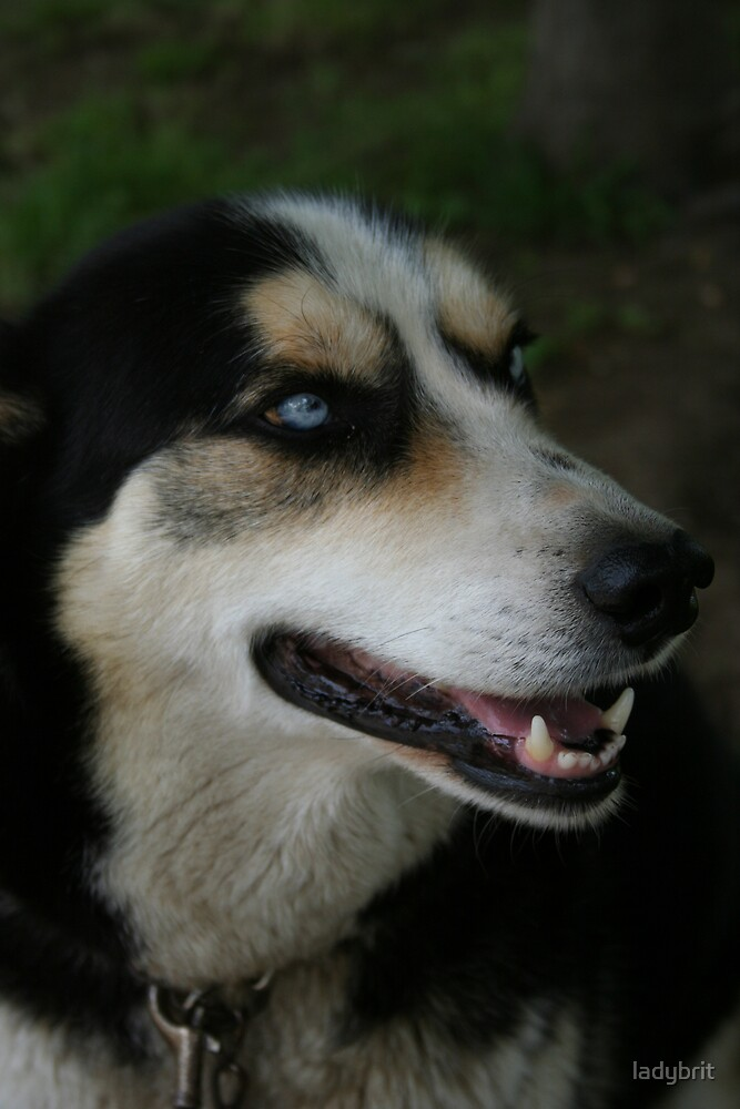 smiling dog by ladybrit