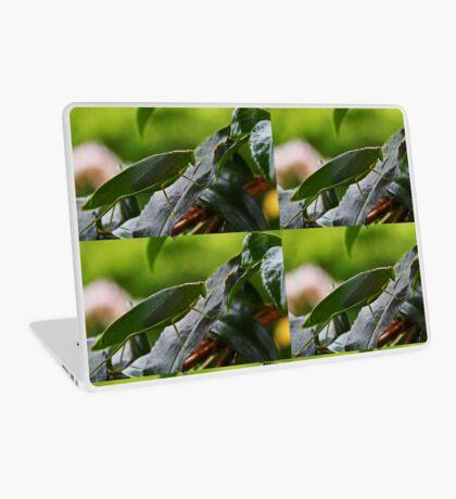 Gum Leaf Katydid (Torbia viridissima) Laptop Folie