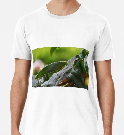 Gum Leaf Katydid (Torbia viridissima) Männer Premium T-Shirts