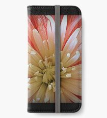 Quill Chrysanthemum, White and Pink, Macro Photograph iPhone Wallet