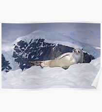 Crabeater Seal, Antarcitca Poster