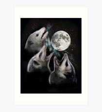 3 Opossum Mond Kunstdruck