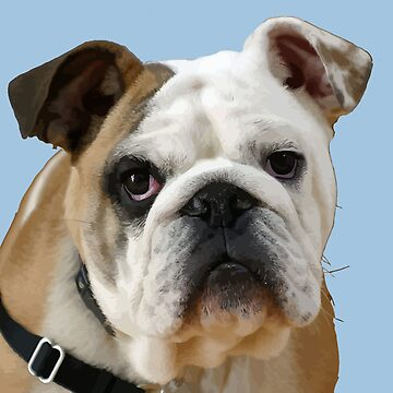 American Bulldog With Sad Eyes Vector by taiche