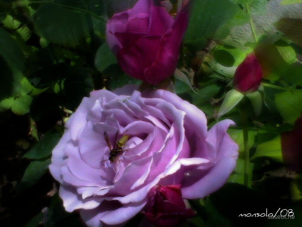 Bee on Roses by saseoche