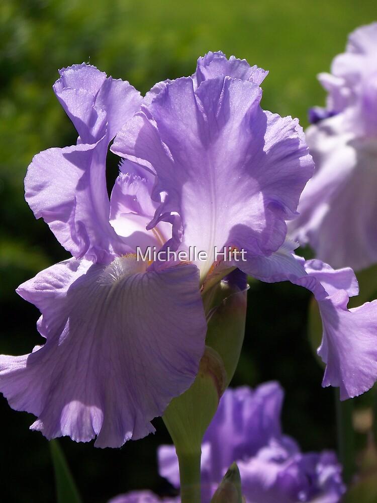 Lavender by Michelle Hitt