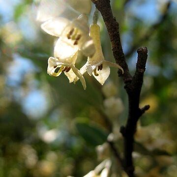 Olive Blooms by KarissaSartell