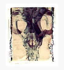 X-Ray Terrestrial No. 1 Photographic Print
