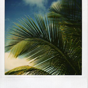 nevis palm by Mayware