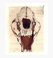 X Ray Terrestrial No. 4 Photographic Print