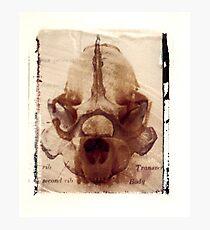 X Ray Terrestrial No. 6 Photographic Print