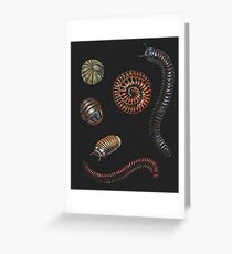 Millipedes Greeting Card