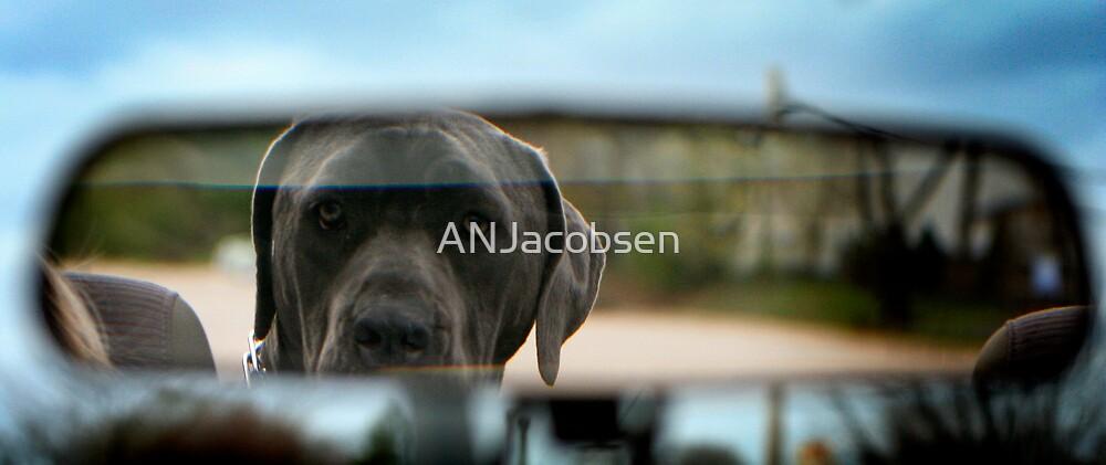Car ride companion by ANJacobsen