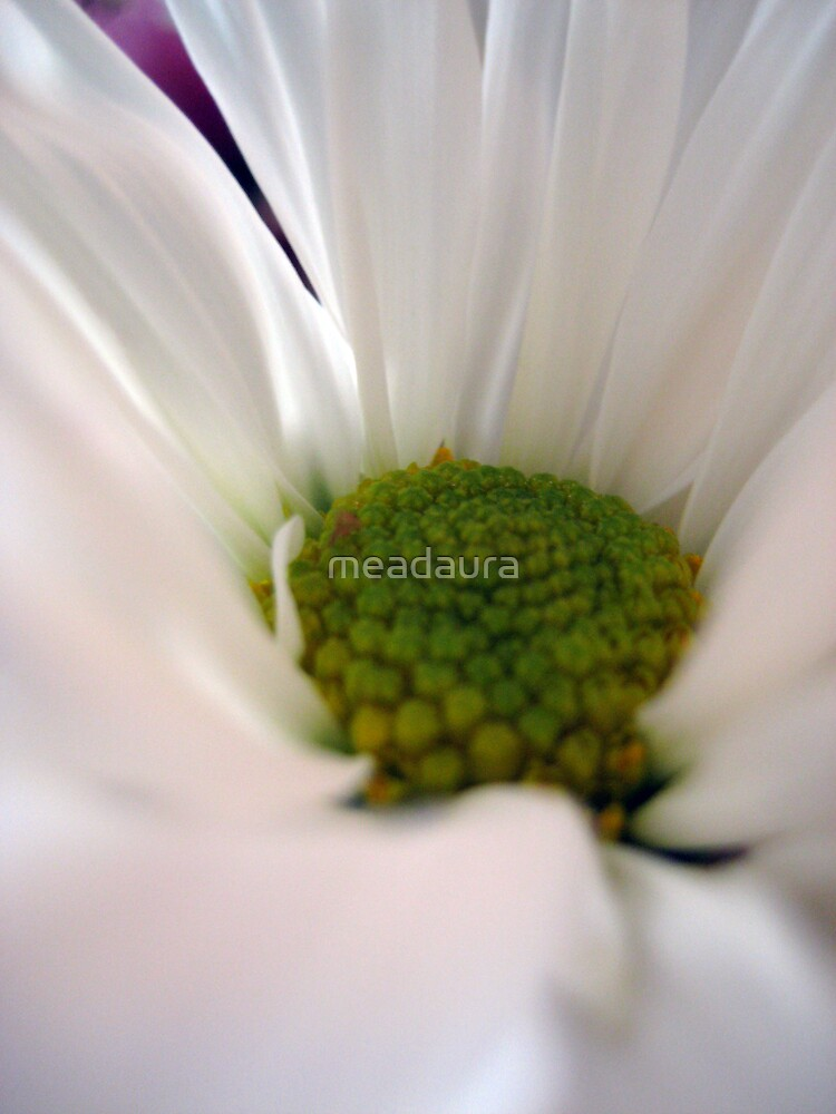Daisy, Daisy, Give Me Your Answer Do by meadaura