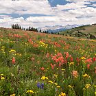 Colorful Summer in the mountains by Alla Gill