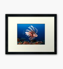 Lionfish Framed Print