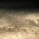 27.7.2017: Mist on Marsh by Petri Volanen