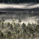 27.7.2017: Mist Over Forest II by Petri Volanen