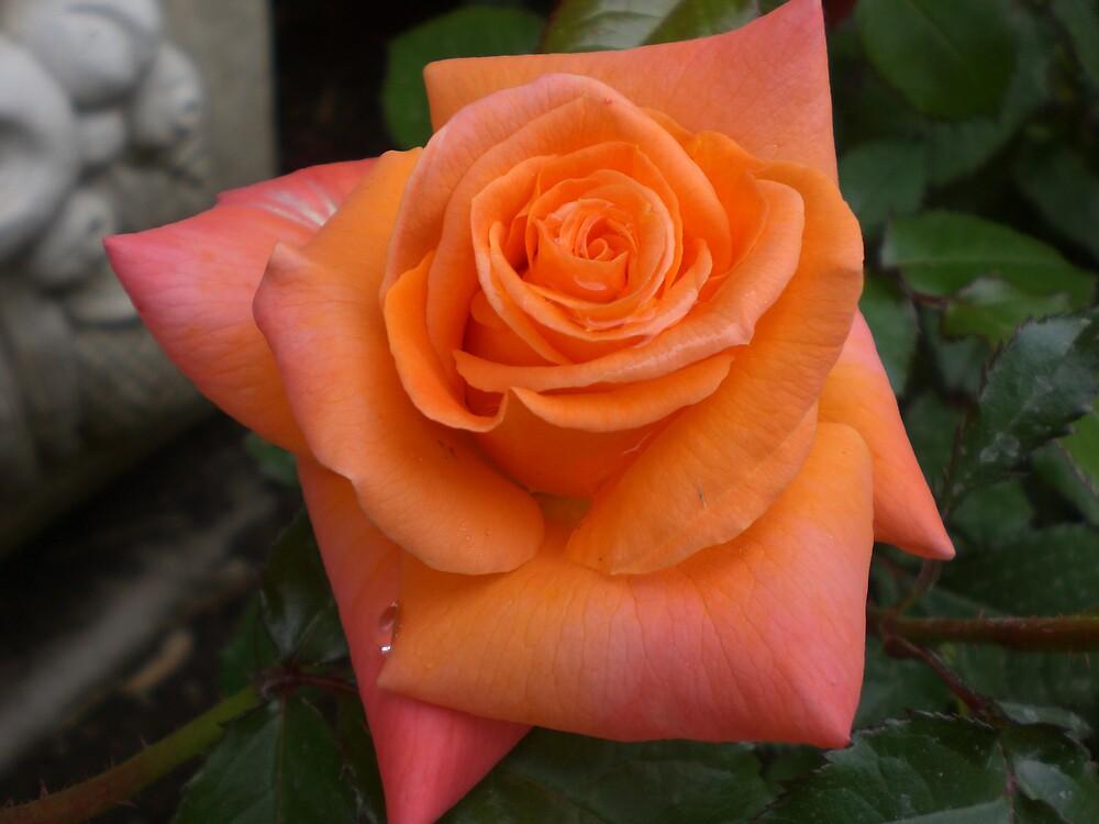 Rose Series #20 by Ellaine Walker