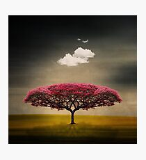 Medusa Cloud Photographic Print