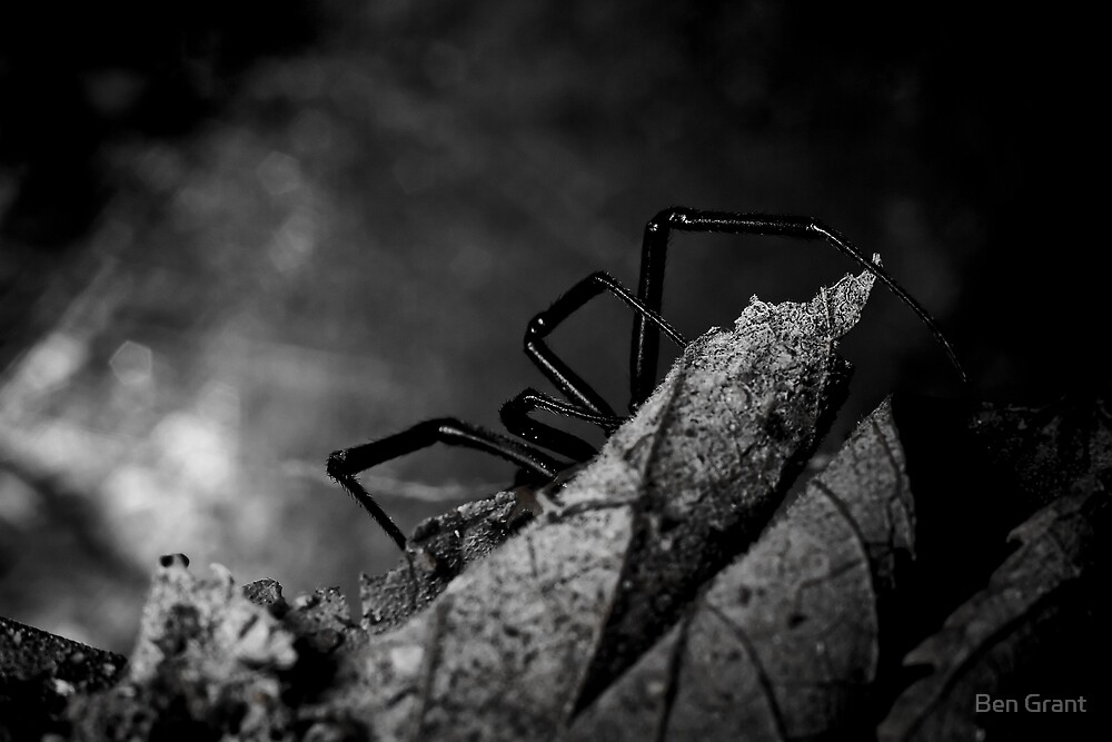 Waiting - B&W by Ben Grant