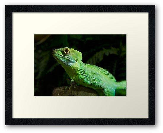 Green Iguana, the beautiful reptile by acasali