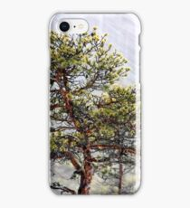 8.1.2015: Pine Tree, Snowfall II iPhone Case/Skin