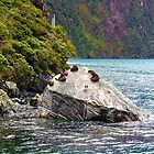 Fur Seals at Milford Sound, New Zealand #2 by Elaine Teague