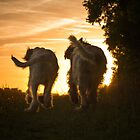 Canine Sunset Silhouettes by heidiannemorris