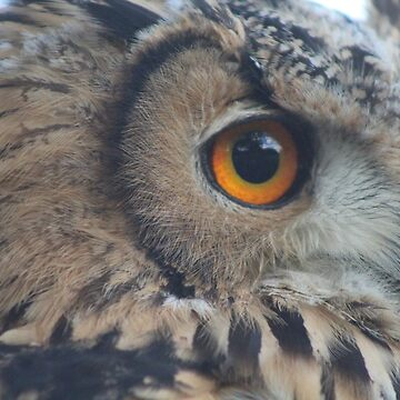 Close Up Owl by durzarina