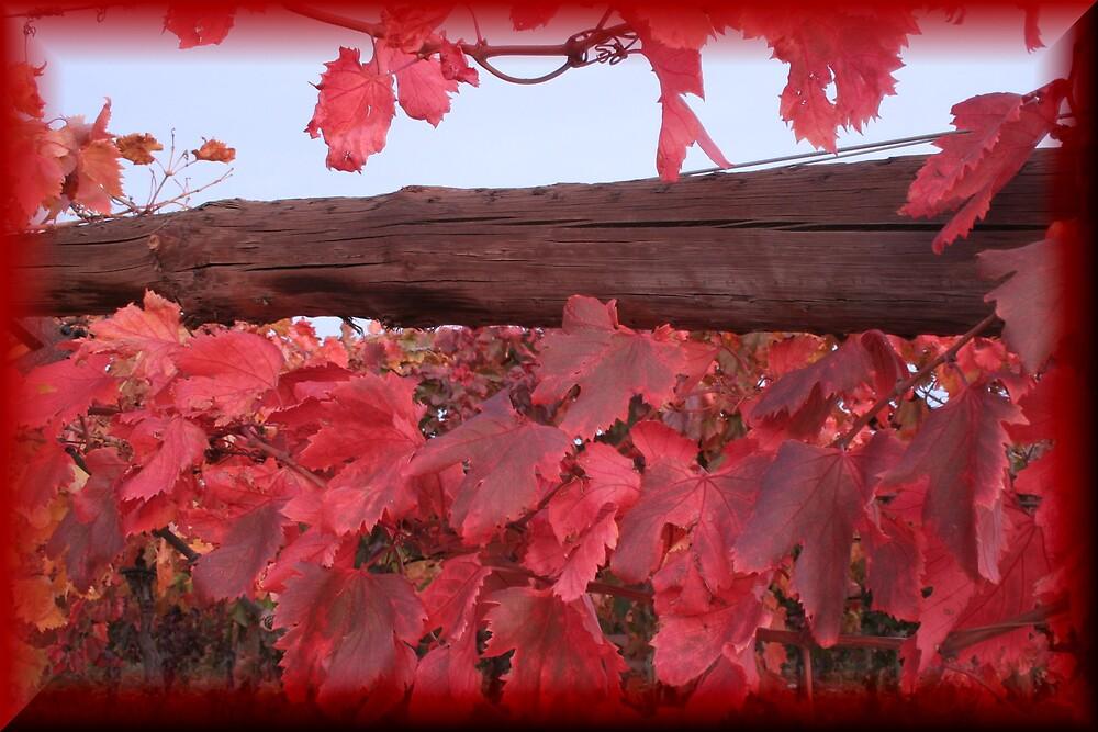 autumn vines by sherryn pitt