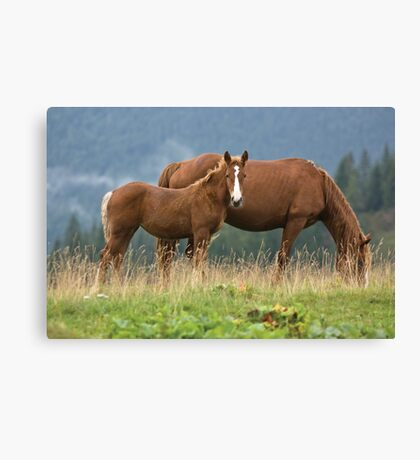 Hey Mom! Who is she? Canvas Print