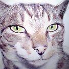 Monty by Siamesecat