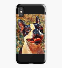 Boston Terrier  in Color iPhone Case/Skin