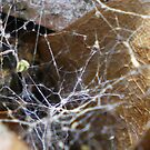 Spider Web by Rebekah  McLeod